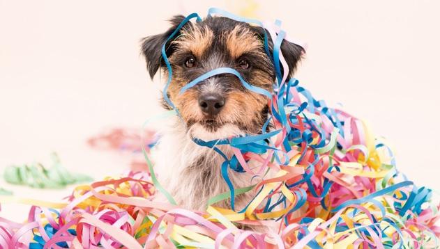 Pets no carnaval