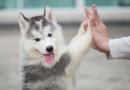 5 passos da posse responsável de animais