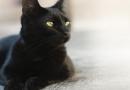 Gatos pretos de tirar o fôlego