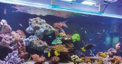 10 mandamentos do aquarista responsável