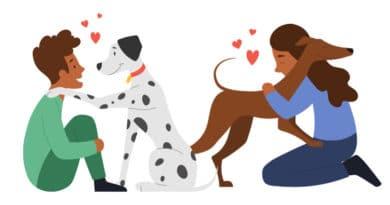 10 cuidados para que seu cão viva mais e melhor