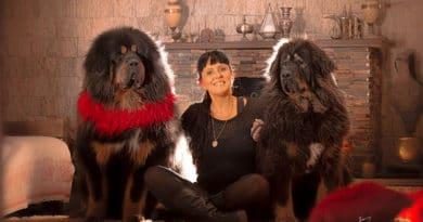 Solar Wonderful: criação de Mastiff Tibetano no Brasil