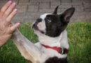 O que o seu cão te diria se pudesse?
