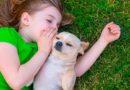 5 formas de melhorar a comunicação com o cão