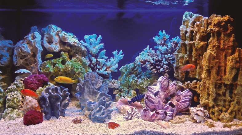 Aquarismo: muito mais que um simples hobby