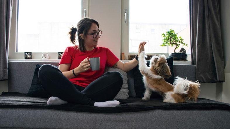 Histórias de pets e donos  durante a quarentena