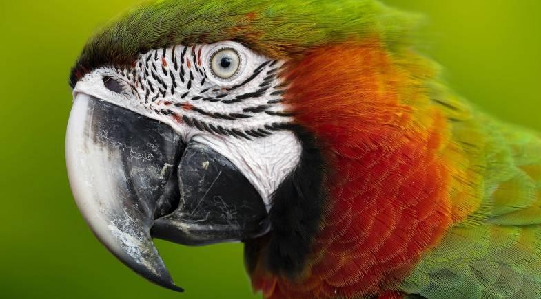 Como detectar doenças nas aves (parte II)