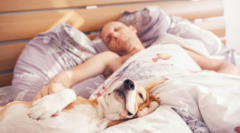 Tutores que dividem cama com cães e gatos dormem melhor